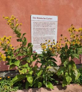 Ein Schild des Römergarten und gelbe Blumen davor. Wand in Altrosa